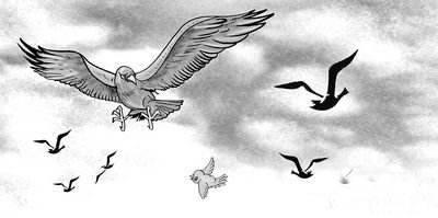 【思维开光商学会】三只鸟三种人三种不同的命运三种不同的人生