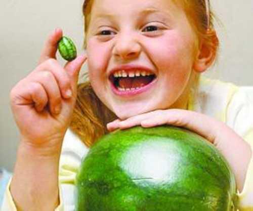 你可能不知道的几个比较有趣的西瓜品种  西瓜 三白西瓜 心形西瓜 方形西瓜 黄皮西瓜 黄瓤西瓜 第5张