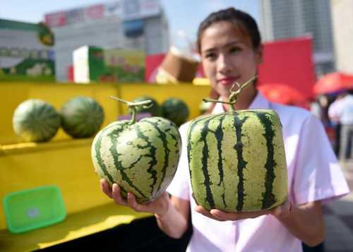 你可能不知道的几个比较有趣的西瓜品种  西瓜 三白西瓜 心形西瓜 方形西瓜 黄皮西瓜 黄瓤西瓜 第6张