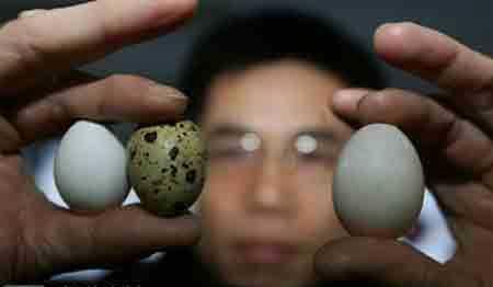 答销售疑问说说我家的鸽子蛋以及其营养价值  鸽子蛋 磊鑫农业 农村创业 随州袋料香菇 蜂蜜 农村土特产 第2张