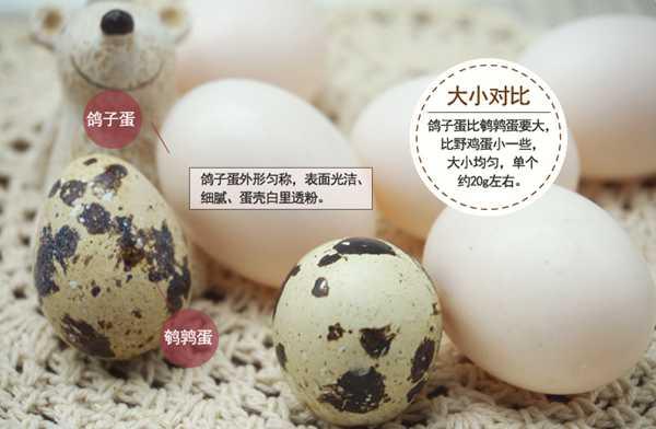 答销售疑问说说我家的鸽子蛋以及其营养价值