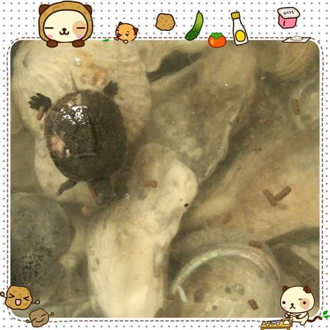女儿亲手杀死了小乌龟  宠物 小乌龟 淹死 女儿 第1张